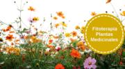 Dispronat, fitoterapia y plantas medicinales