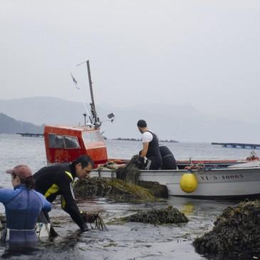 Algamar, la marca especializada en algas atlánticas ecológicas y silvestres, cumple 20 años