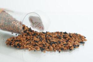 Ecoriginal las semillas el origen de la vida